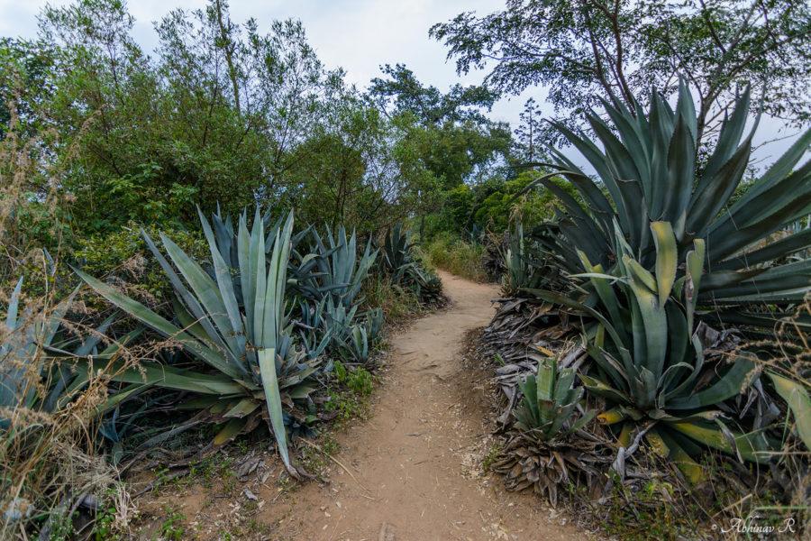 Kovilkadavu Anakkottappara Park