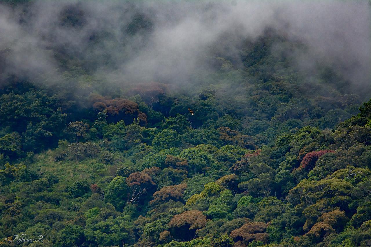 Pampadum Shola National Park Fog