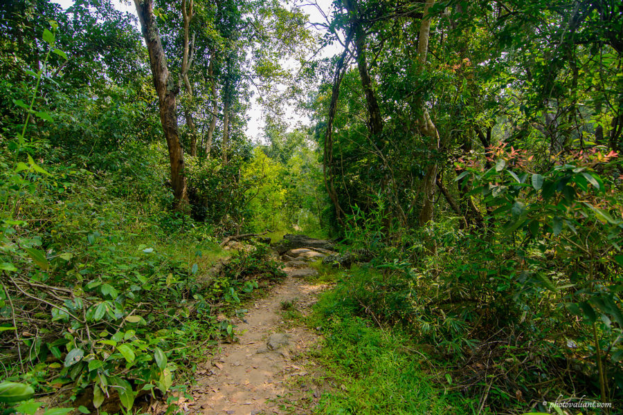 Trekking path to Thoovanam waterfalls