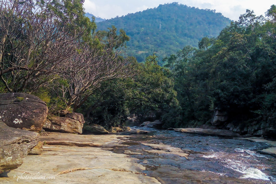 On the way to Thoovanam Waterfalls - Chinnar Wildlife Sanctuary