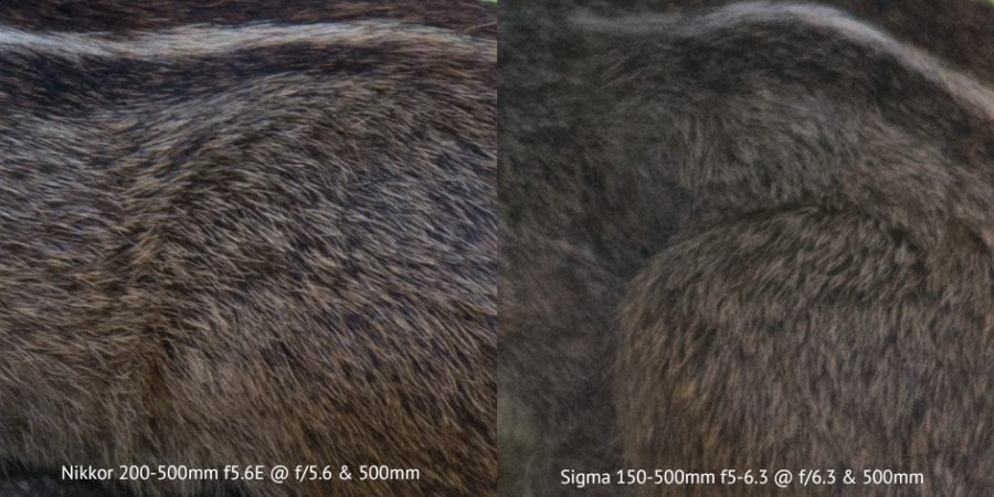 Nikon 200-500mm vs Sigma 150-500mm