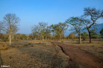 A View from Masinagudi, Tamil Nadu