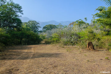 A view from Masinagudi