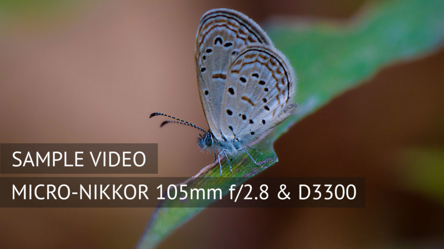 Nikon 105mm f2.8 macro with D3300 - Sample Video 1
