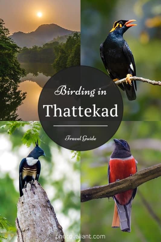 Birding in Thattekad