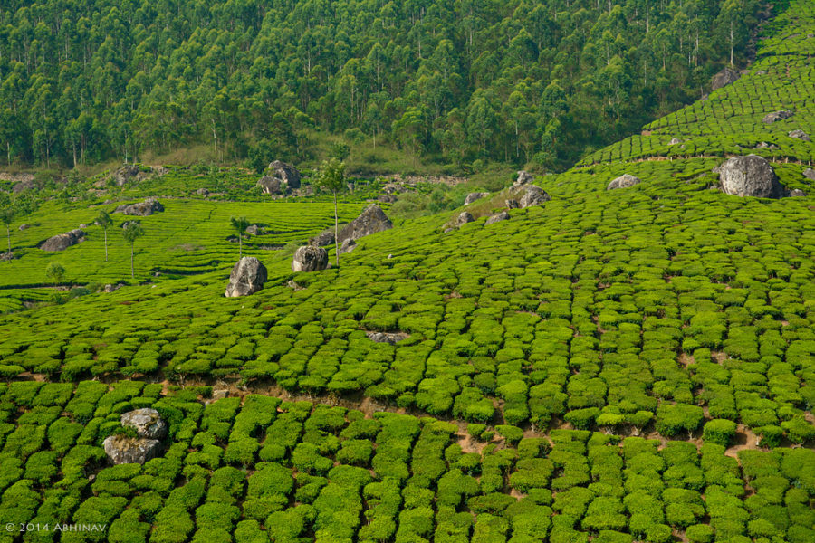 Gap-Road-Munnar-5910