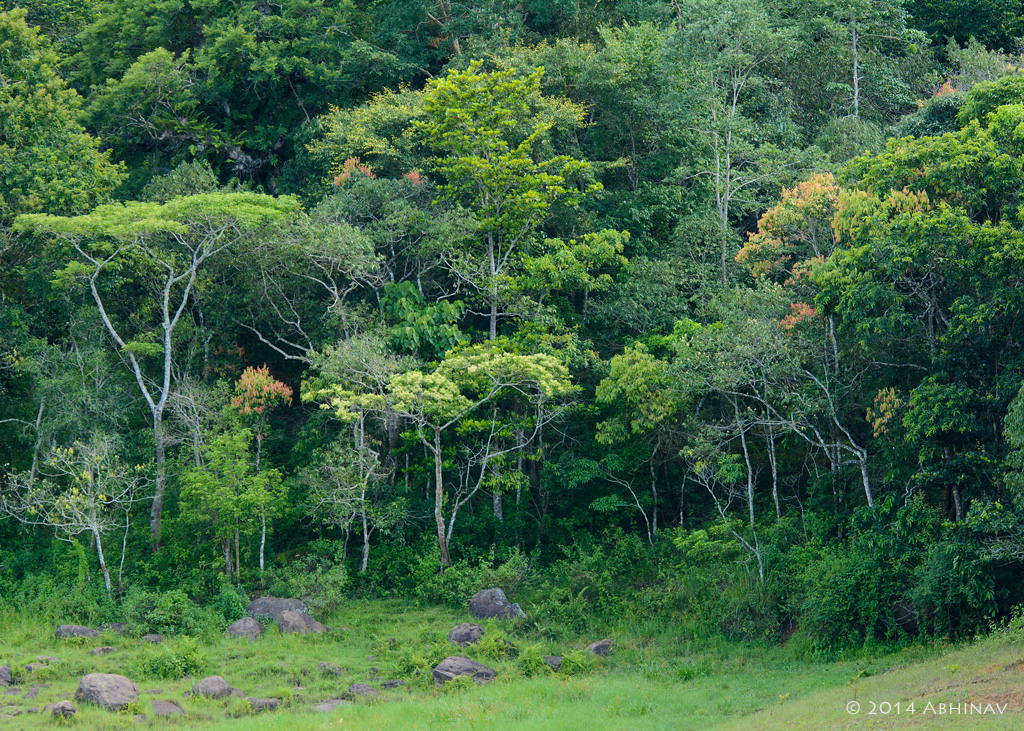 Periyar tiger reserve photo album photovaliant for The evergreen