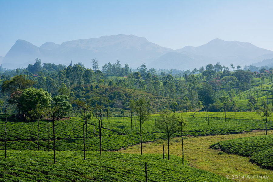 A view from Valparai